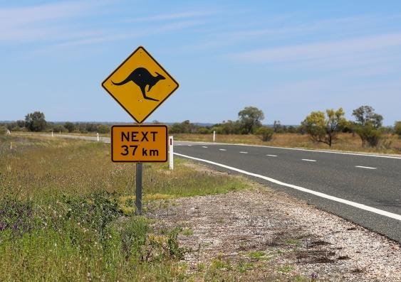 kangaroo ahead sign
