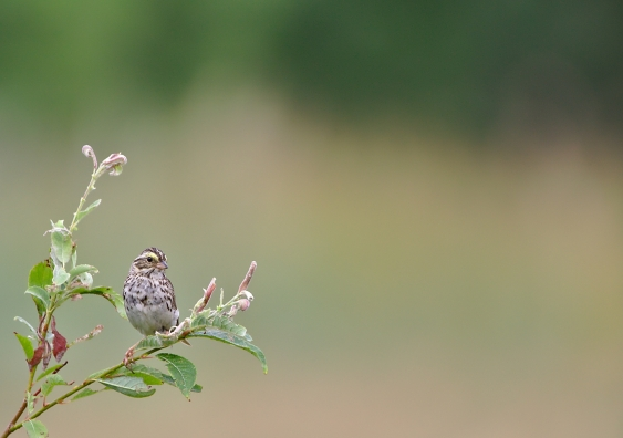 small bird sitting on a weed