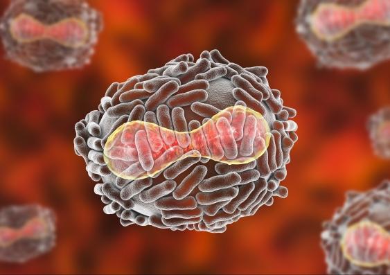 smallpox_739418644.jpg