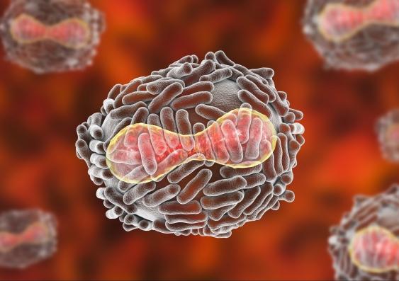 smallpox_739418644_2_1.jpg