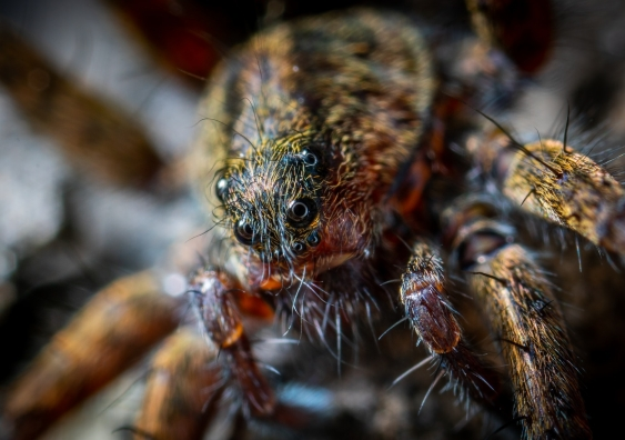 Close-up view of a hairy spider