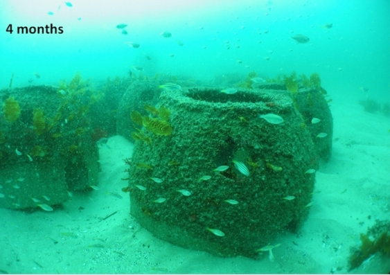 Artificial reefs four months after installation