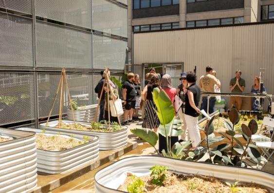 unsw urban garden