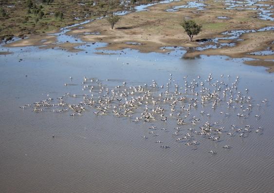 waterbirds.jpg