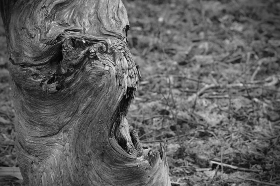 Angry face in tree
