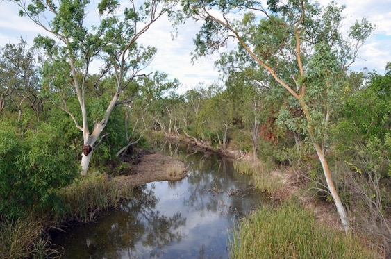 Trees, reeds and scrub line a still part of Surprise Creek, Northern Territory