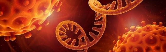 Computer artwork showing closeup of virus approaching strand of RNA