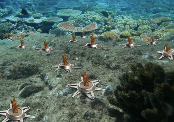 Coral Cradle
