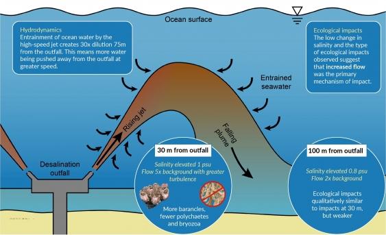 desalination_outfall_water_flows.jpg