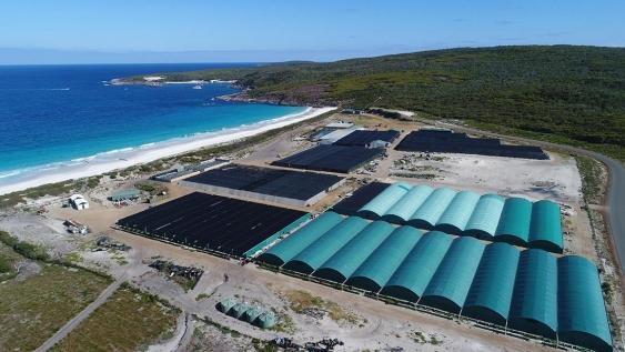 888 Abalone at Bremer Bay, Western Australia