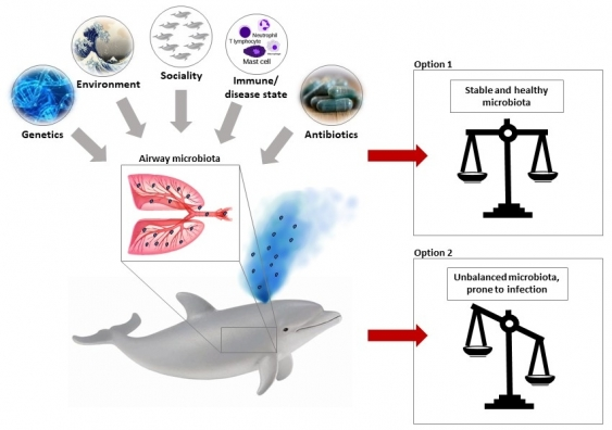 Graphic showing composition of airway bacteria in dolphins