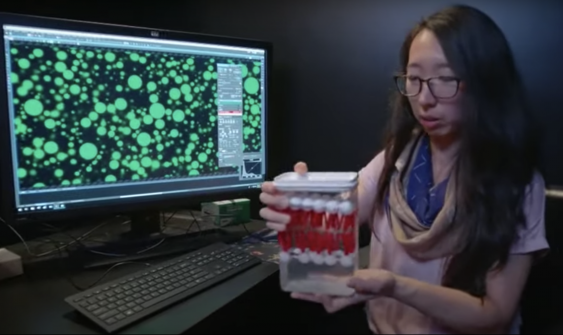 Anna Wang in the Szostak Lab imaging artificial cells