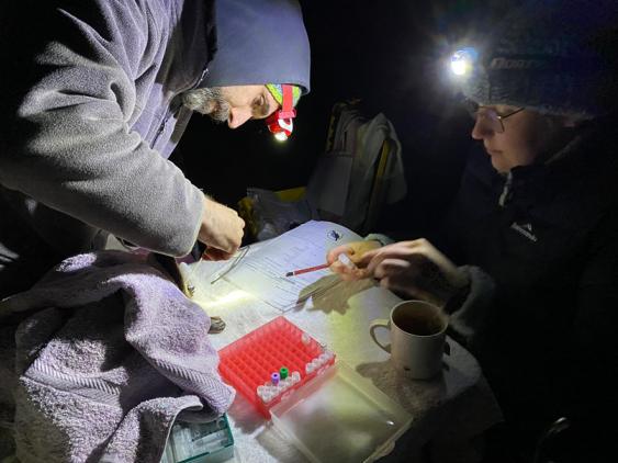 Examining a platypus caught on Kangaroo Island
