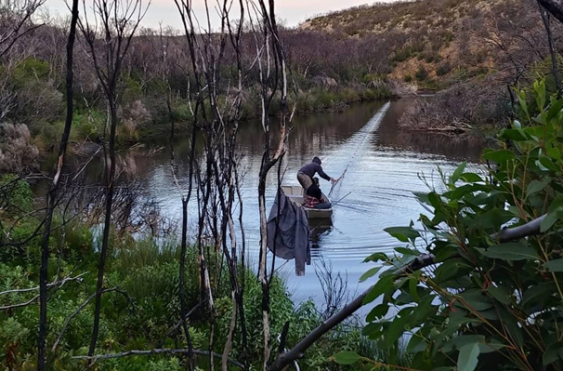 The researchers setting nets to catch platypuses on Kangaroo Island