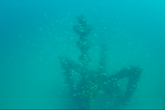 Baitfish around the artificial reef surveyed by the researchers