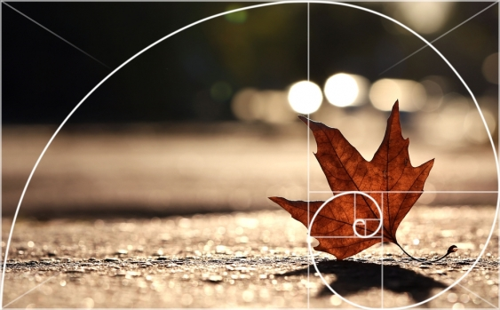 The Golden Spiral in photography