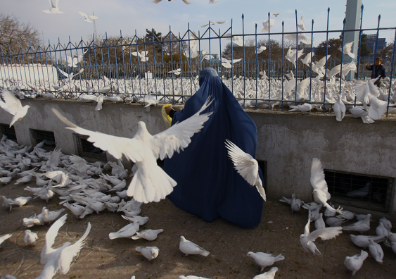 A woman in a blue burqa and a child among a flock of doves (a symbol of peace in many cultures) in Afghanistan in 2009.  Photo: kursat-bayhan/Shutterstock.