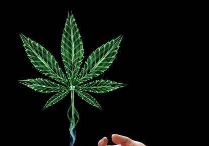 16 cannabis 0 0