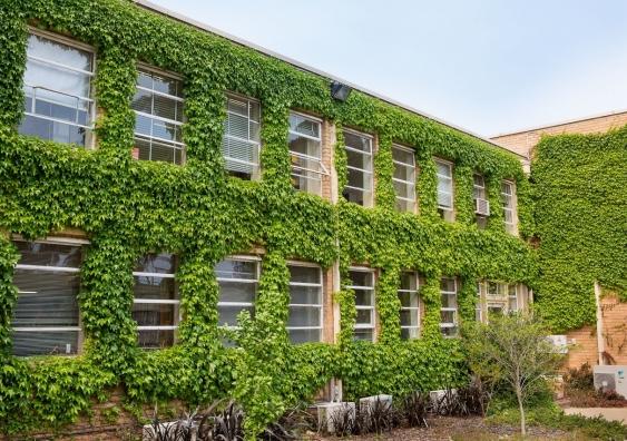 Green facade, vegetation growing on melbourne university building
