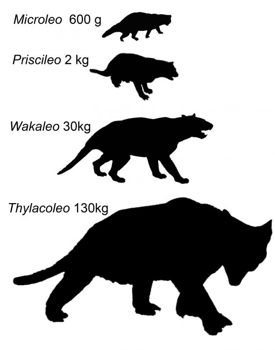 24_marsupial_comparison.jpg