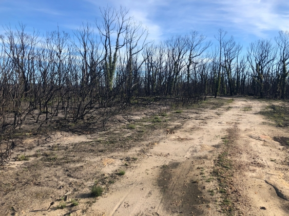 NSW landscape affected by the 2019/2020 bushfire