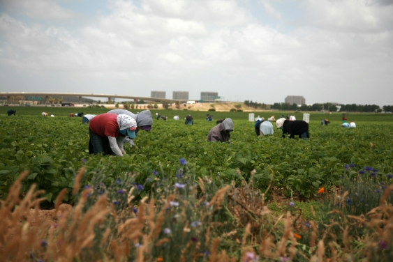 Labourers in a field