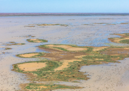 Extensive wetland areas of the Bulloo Overflow, with nests of black swans (dark clumps)