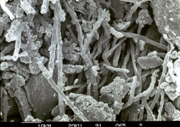 Thin fungal filaments associated with biocrusts stick to soil particles, increasing soil stability and altering water flow.
