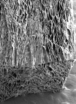 Silk cross section electron microscope