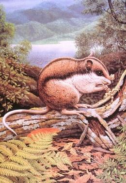 Omnivorous kangaroo