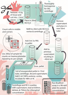 methodology_for_soft_coral_processing.png