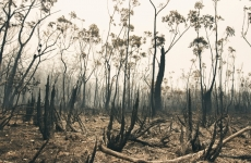 Burnt bushland in Iluka NSW