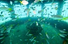fish_inside_riser.jpg
