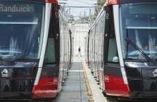 trams_on_the_randwick_line.jpg