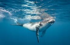 whale_shutterstock.jpg