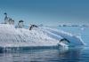04_antarctica_shutterstock.jpg