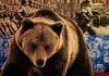 11 Russian Bear 1