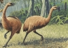 14_giant_haasts_eagle_attacking_new_zealand_moa.jpg