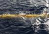 17 MH370 1