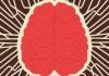 17 brain 1