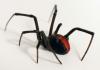 17_redback_spider.jpg
