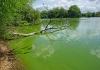 190424_algae.jpg