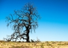24_deadtree_shutterstock.jpg