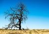 24_deadtree_shutterstock.jpg