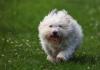 2_dog_shutterstock.jpg