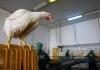 9_avianflu.jpg
