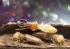 9_termites.jpg
