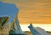 Antarctica web