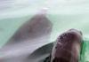 Dolphin inside