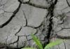 Drought web